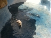 pool-cleaning-and-pool-draining-services-az